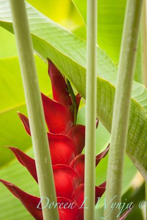 Heliconia Caribaea & gecko_101