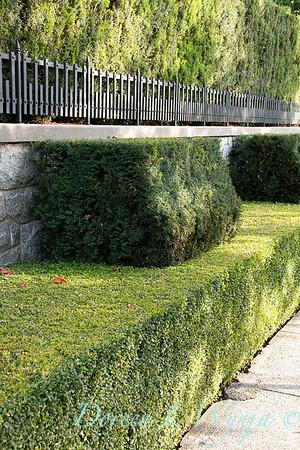 Hedge_5402