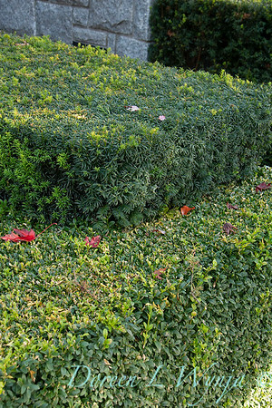 Hedge_5401