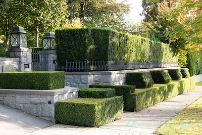 Hedge_5398