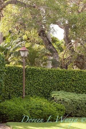 Ficus benjamina - Pittosporum tobira 'Variegata' double hedge_0046