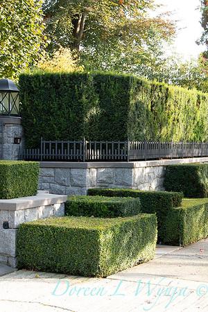 Hedge_5392