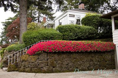 Azalea hedge - rock wall_5536