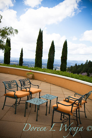 Italian cypress setting_001