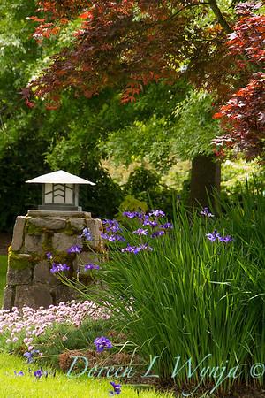 Iris sibirica 'Ruffled Velvet' - Acer palmatum var atropurpureum 'Bloodgood' - Armeria maritima_2161