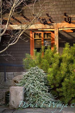 5070 Juniperus horizontalis Wiltonii_022