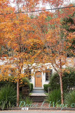 Lagerstroemia - Dietes flanking an entry fall color_1426