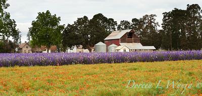 Larkspur California Poppy meadow_004