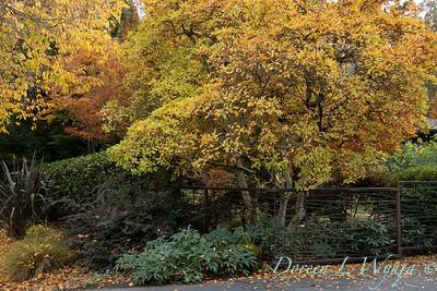 Custom metal fence - Helleborus - Magnolia fall landscape_5369
