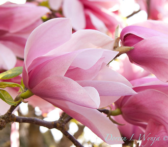 Magnolia Star Wars_001
