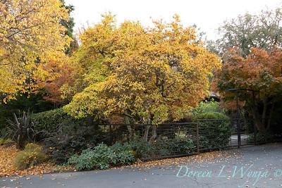 Custom metal arched gate - fence - Helleborus - Magnolia fall landscape_5366