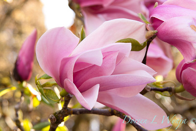 Magnolia Star Wars_004