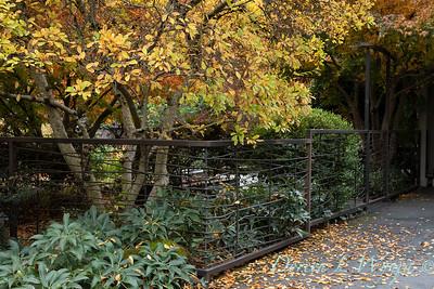 Custom metal arched gate - fence - Helleborus - Magnolia fall landscape_5359
