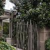 Magnolia grandiflora - front entry iron gate_1020