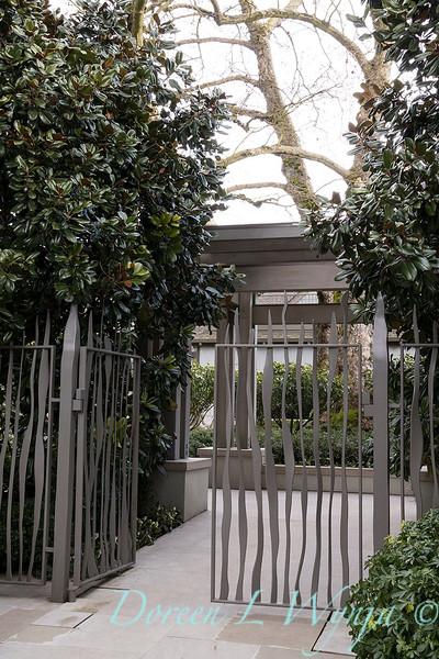 Magnolia grandiflora - front entry iron gate_1018