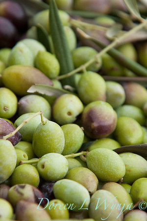 Olives waiting to be pressed_009