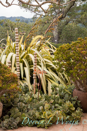 Phormium 'Yellow Waves' - Crassula ovata 'E T  Fingers' - Cotyledon macrantha - 'underwater bubbles' ceramic sculpture_0806