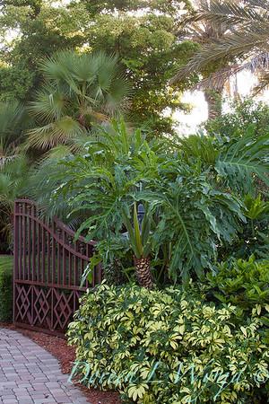 Philodendron selloum - Schefflera arboricola 'Variegata' landscape_003
