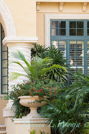 Ravenea rivularis – Lantana urn planter by Chamaedorea cataractarum_9391