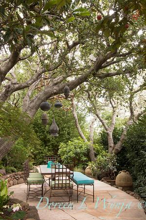 Quercus agrifolia - Prunus laurocerasus 'Schipkaensis' hedge - outdoor dining_0623