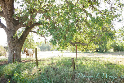 Quercus Old Oak and Horse_0619