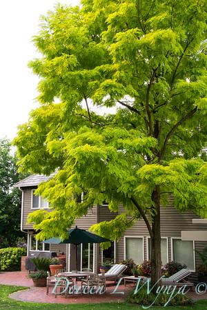35 Robinia pseudoacacia Frisia_MG_5469