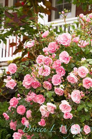 Rosa The Fairy_002