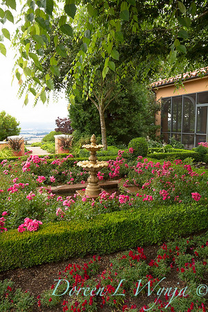 Rosa Flower Carpet 'Pink Supreme' - Antirrhinum majus_001AMG