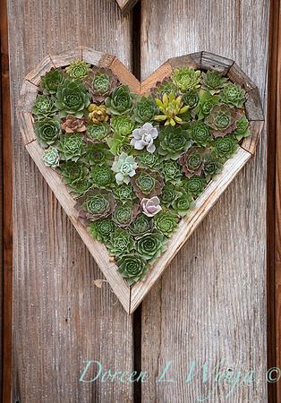 sedum living wall heart container_1080