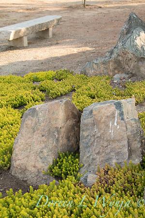 Sedum rupestre 'Angelina' ground cover with stone bench