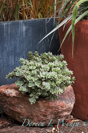 Sedum 'Lime Zinger' Sunsparkler in a rock container