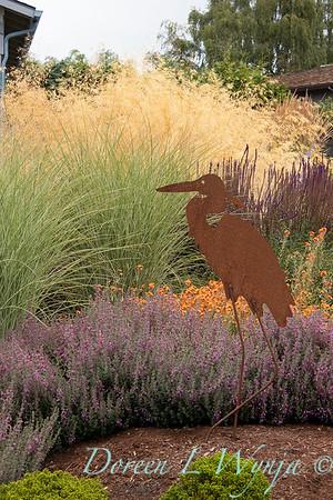 Teucrium chamaedrys - Miscanthus sinensis 'Morning Light' grass landscape - heron_1308