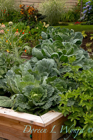 Urban vegetable garden_022
