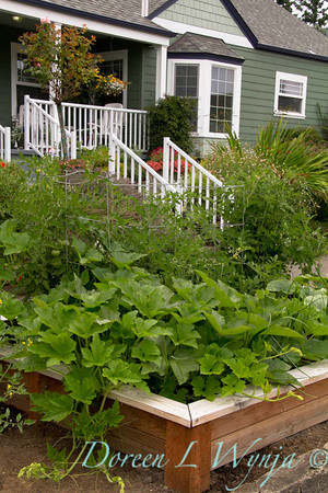 Urban vegetable garden_027