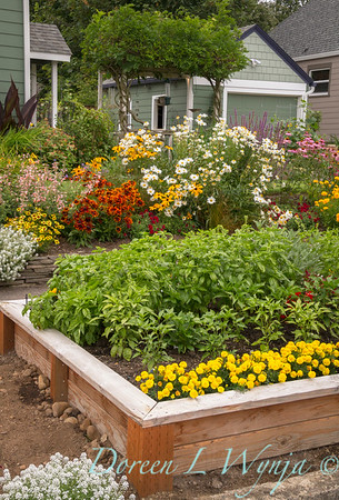 Urban vegetable garden with marigolds and peppers growing in a wooden raised bed, flowering garden, cutting garden, in the background
