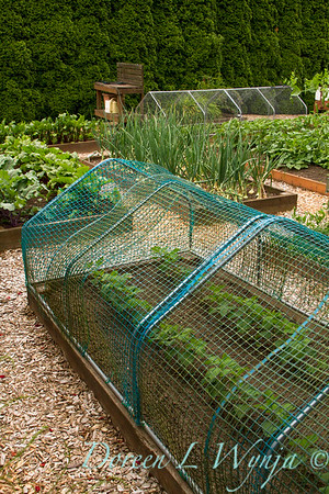 Raised bed; vegetable garden with deer and rabbit protection of netted mesh, creating a barrier; keeping the deer and rabbits out