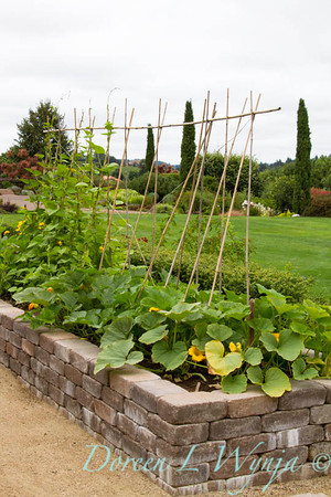 Urban vegetable garden, with a stacked paver raised bed; veggie garden; garden support trellis of bamboo stakes