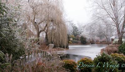 Monrovia winter frost landscape_9282