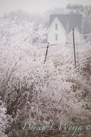 Winter frosted country road_9503