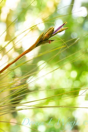 Tillandsia juncea bloom; air plant flower