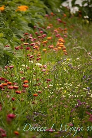 wildflower countryside_0209