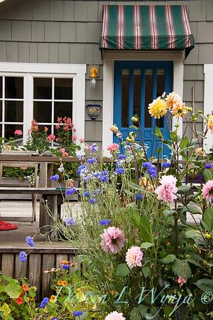 Centaurea cyanus - cottage garden_3529