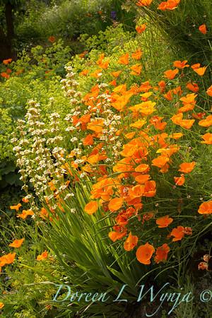 Cottage Garden_0989