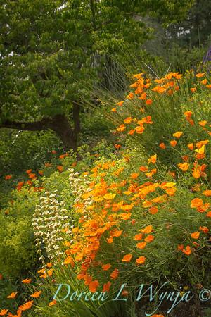 Cottage Garden_0988