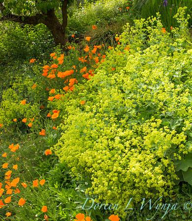 Cottage Garden_0990