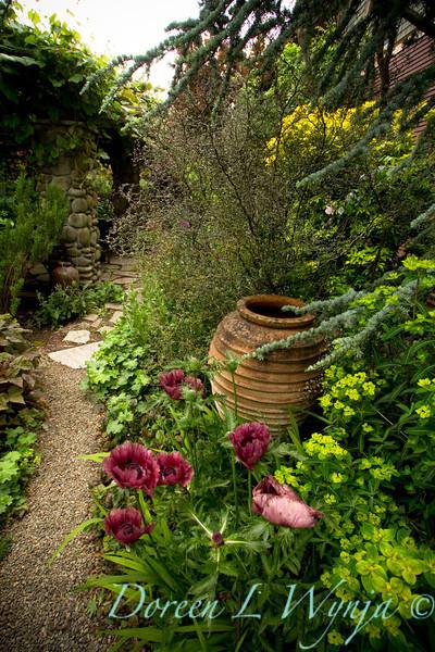 Papaver Patty's Plum pathway_Doreen Wynja_017