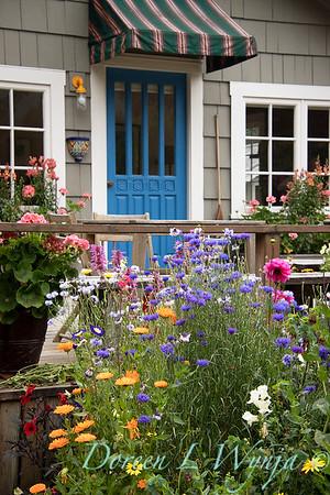 Centaurea cyanus - cottage garden_3535