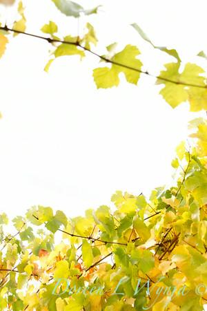 Fall Grape Leaves_2812