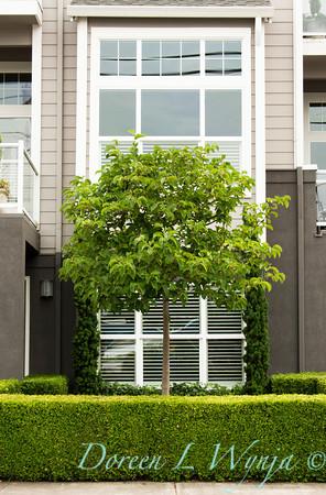 Magnolia Deciduous_001
