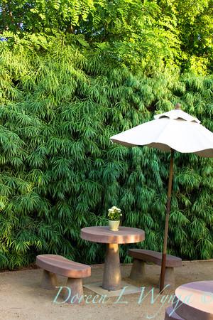 Podocarpus henkelii_007